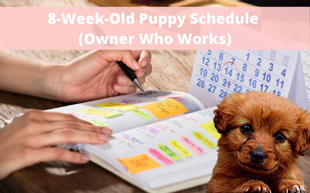 Sample House Training Schedule for an 8-Week-Old Puppy with an Owner Who Works