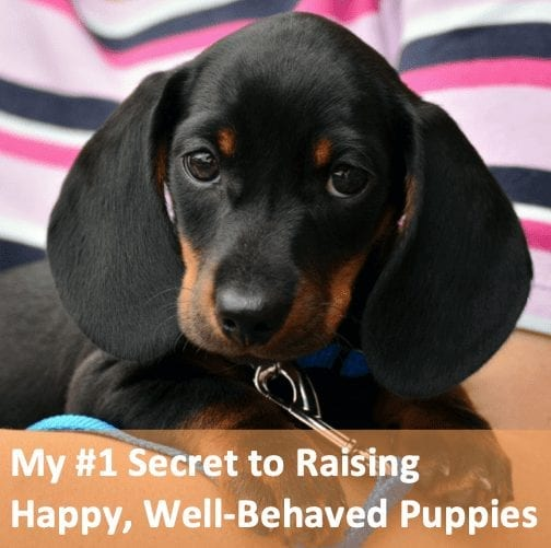 My #1 Secret to Raising Happy, Well-Behaved Puppies