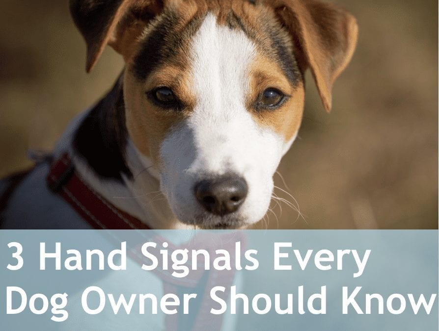 3 Hand Signals Every Dog Owner Should Know