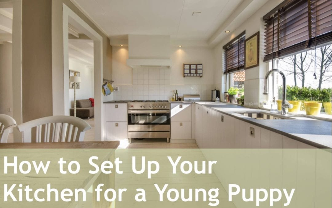 How to Set Up Your Kitchen for a Young Puppy