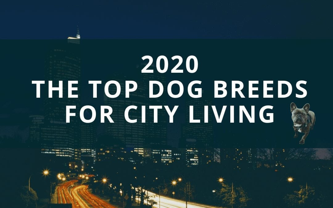 What are the best dog breeds if you live in a city?