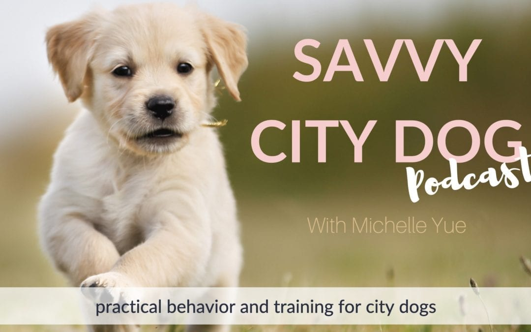 Savvy City Dog Podcast Background