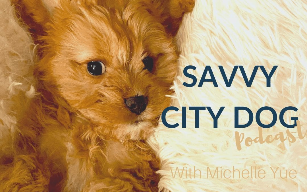 savvy city dog podcast