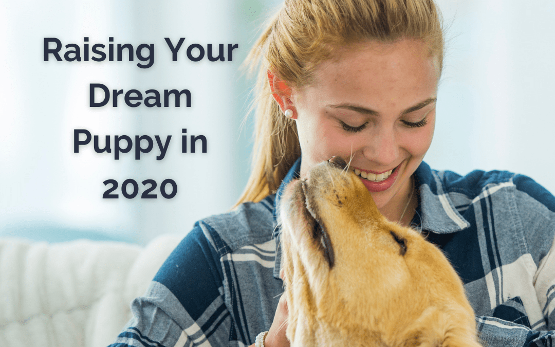 Puppy Raising to Create Your Dream Dog