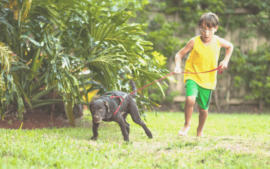 Podcast Season 2 Episode 4: Living in Harmony When You Have Kids and a Puppy